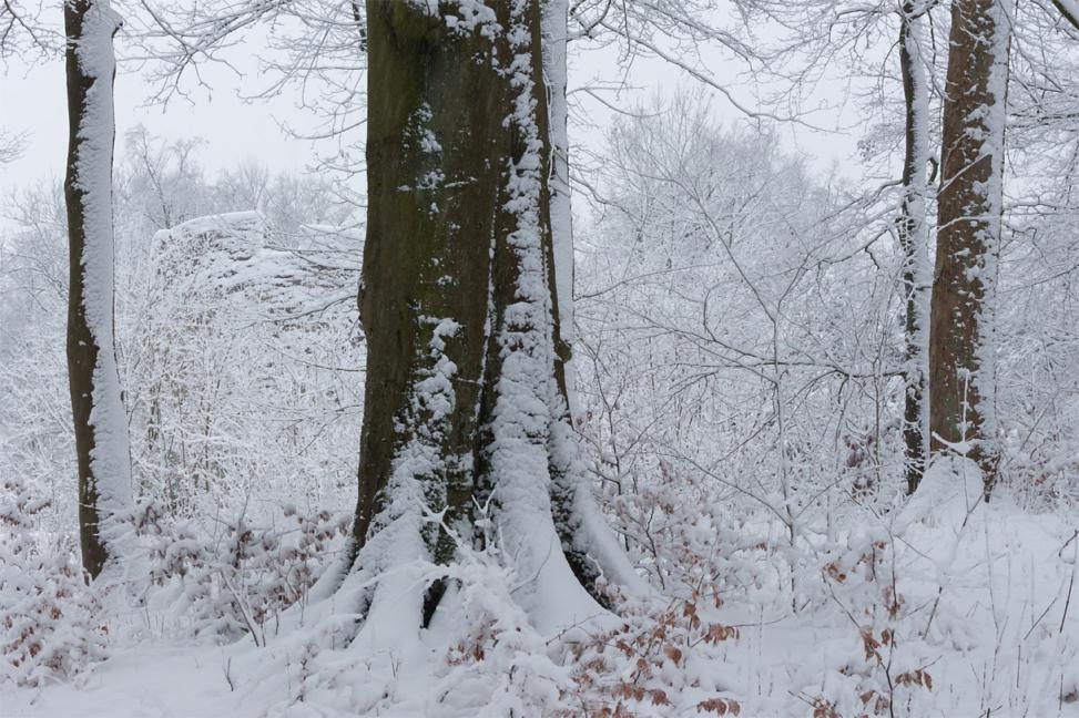 Schnee in den Iburg-Ruinen bei Bad Driburg (Kreis Höxter, NRW)