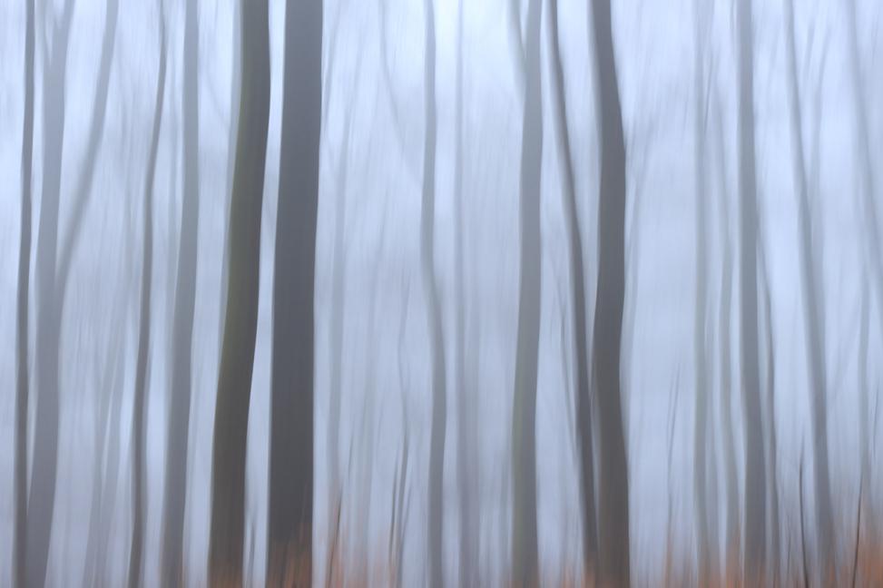 Nebel im Rotbuchen-Wald nahe der Iburg bei Bad Driburg (Kreis Höxter, NRW)